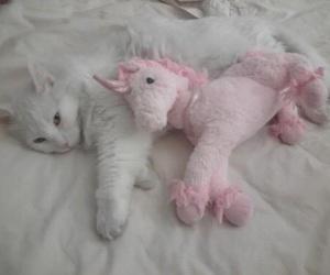 cat, unicorn, and pink image