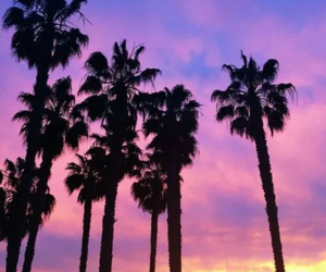 palm trees, sky, and nature image