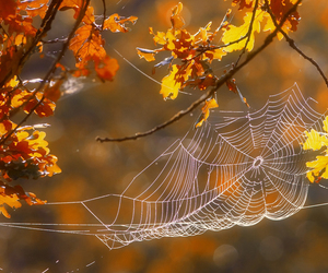 autumn, nature, and spider web image