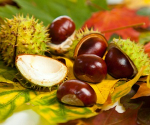 autumn, beautiful, and chestnuts image