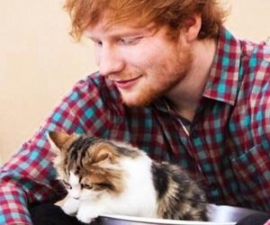 ed sheeran and cat image