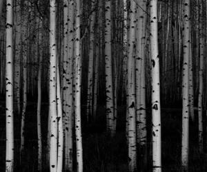 forest, creepy, and trees image