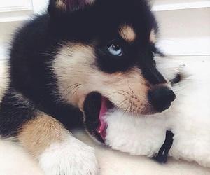 dog cute blue eyes image