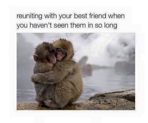 best friends, funny, and monkey image