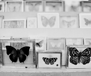 butterfly, black and white, and b&w image