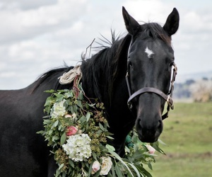 animals, flowers, and horse image