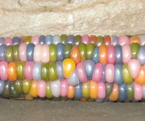 colorful, corn, and glass gem corn image