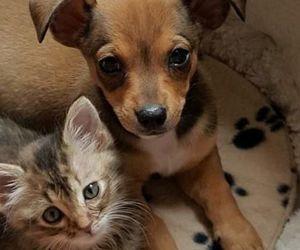cat, dog, and sweet image