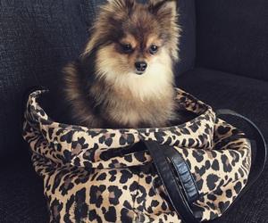 bag, dog, and fluffy image