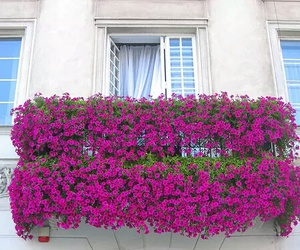 flowers, balcony, and pink image