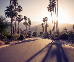 palms, sunshine, and photography image
