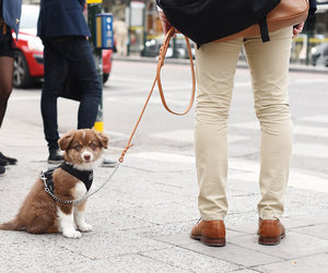 dog, puppy, and brown brogues image