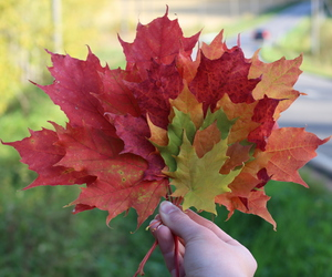 colorful and leaves image