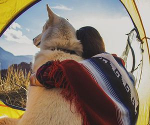 camping, dog, and mountains image