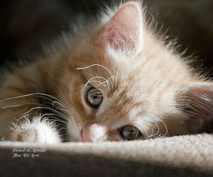 cat, cute animals, and kitten image