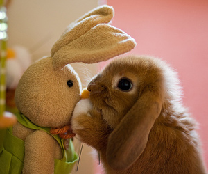 baby, easter bunny, and toy image
