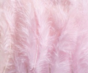 pink, pastel, and feather image