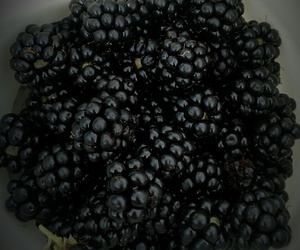blackberry, food, and forest image
