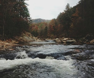 autumn, colorful, and fall image