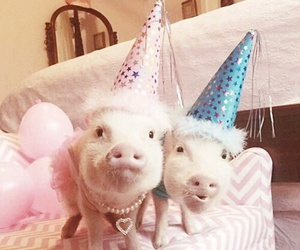 animals, pig, and vegan image