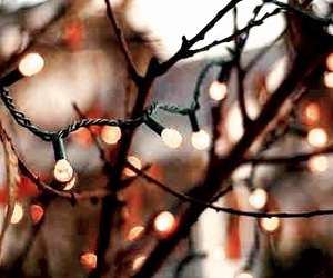 beauty, branches, and fairy lights image