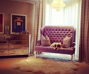 luxury, dog, and room image