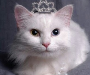 adorable cats image
