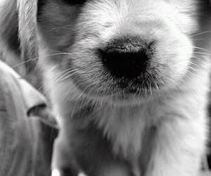 cachorro, dog, and fofo image