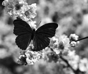butterfly, flowers, and nature image