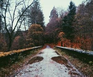 autumn, rainy, and weather image