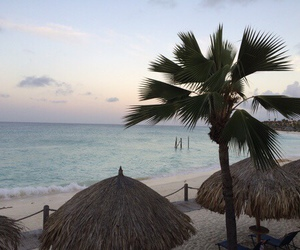 ocean, beach, and palm image