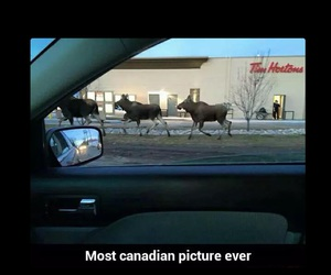 animals, canada, and canadian image