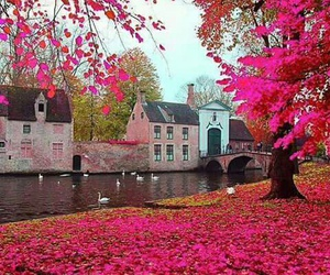 pink, belgium, and nature image