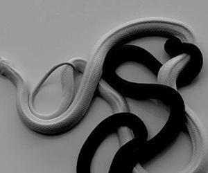 snake, white, and black image