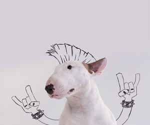 dog and rock image