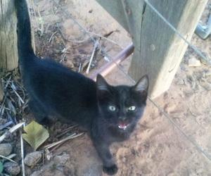 black, cat, and miau image
