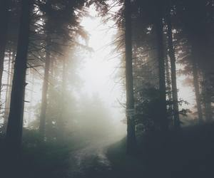 alternative, forest, and grunge image
