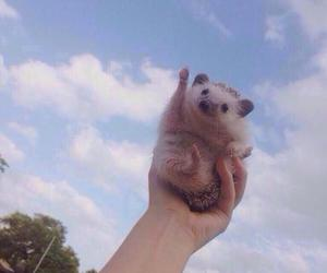 happy, cheering, and hedgehog image