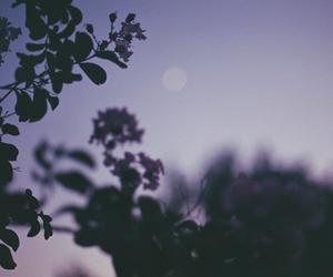 moon, purple, and tree image