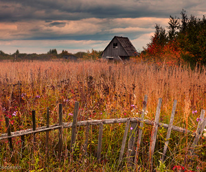 autumn, fall, and field image