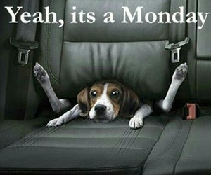 dog and monday image