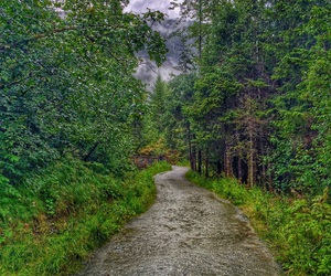 alaska, road, and woods image