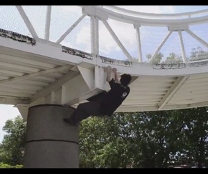 parkour, sport, and video image