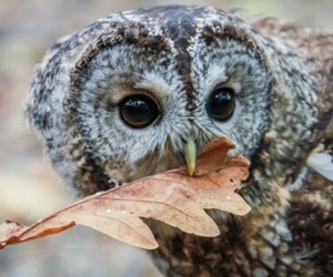 owl, animal, and autumn image