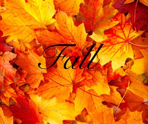 autumn, background, and red yellow image