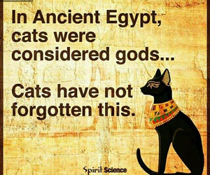 cat, funny, and god image