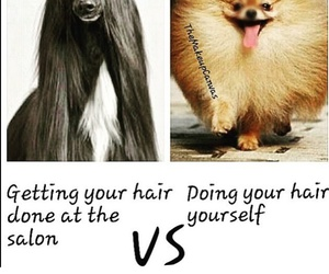 hair, lol, and salon image