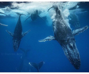 ocean, sea, and whale image