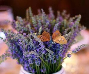 butterfly and lavanda image