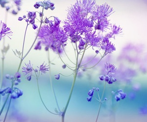 flowers, nature, and pastels image